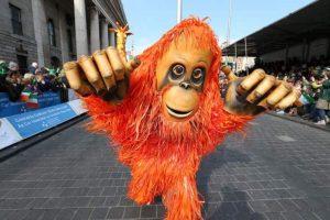Animal theme entertainers, Orangutan walkabout puppet